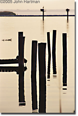 """Pilings and Ducks"" photograph"